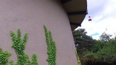 Stock Video Footage of Ivy Growing on the Side of a Cylindrical Building