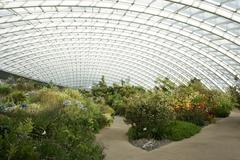 Shrubs in a large greenhouse - stock photo