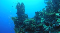 School of fish near coral reef, Red Sea, Sharm el Sheikh, Egypt, Sinai Stock Footage