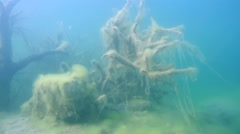 Tree in submerged wood - stock footage