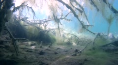 Branches of trees covered with algae in a flooded forest Stock Footage