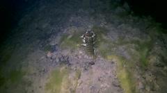 Cancer, or crawdad runs through the muddy bottom of the lake, night - stock footage