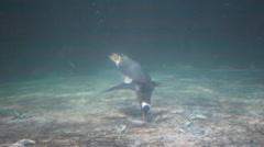 Penguin feeding in aquarium Stock Footage