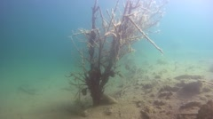 Tree branches covered with algae in a flooded forest - stock footage