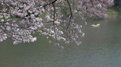Visitors on rental boats enjoying blooming cherry blossoms Stock Footage