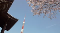 View of Tokyo Tower with blooming cherry blossoms, Tokyo, Japan Stock Footage