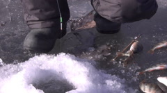 The fisherman on winter fishing catches perch Arkistovideo