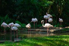 Gracefull white long legged flamingoes in a lush jungle river. Stock Photos