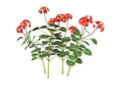 3D Illustration Red Geranium on White - stock illustration