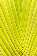 Green palm tree leaf background Stock Photos