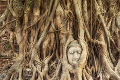 Head of Buddha Statue in the Tree Roots at Wat Mahathat, Ayutthaya, Thailand - stock photo