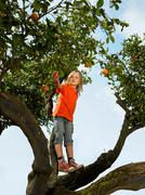 Young girl standing in an orange tree - stock photo