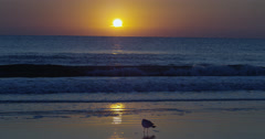 Sunrise over the Atlantic  Beach,  Florida, United States Stock Footage