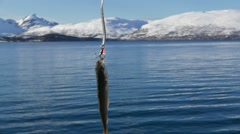 North of Norway. Fishing rod with the fish at fjord. Stock Footage