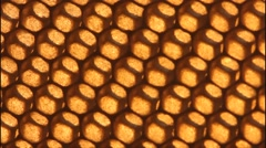 Background of honeycombs Stock Footage