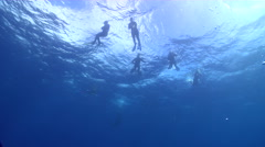 Freedivers swimming in bluewater in Kingdom of Tonga, HD, UP15172 Stock Footage