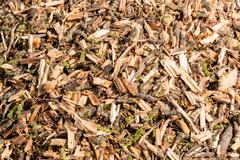 Close Up of Crushed Tree Branches Stock Photos