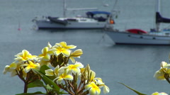 Frangipani with distant yachts out of focus, HD, UP15397 - stock footage