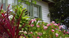 Garden and cottage, HD, UP15506 Stock Footage