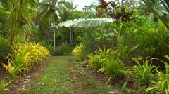Track through botanical gardens, HD, UP15518 Stock Footage