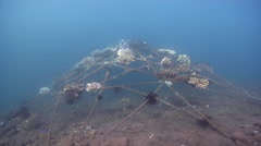 Ocean scenery lots of fish and coral growing on artificial reef structure, on - stock footage