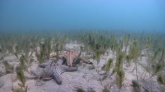 Ocean scenery on seagrass meadow, HD, UP25025 Stock Footage
