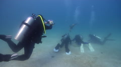 Group of scuba divers swimming on sand with Galapagos sea lion in Galapagos Stock Footage