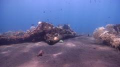 Ocean scenery black sand, on wreckage, HD, UP25896 Stock Footage