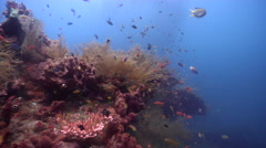 Ocean scenery lots of fish and hydroids on structure, large school of jacks in Stock Footage