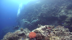 Green turtle swimming on coral reef, Chelonia mydas, HD, UP25667 Stock Footage