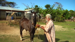 Tongan man putting a bridle on a horse, people or person in shot, HD, UP15755 Stock Footage