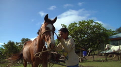 Tongan boy leading a horse, people or person in shot, HD, UP15757 Stock Footage