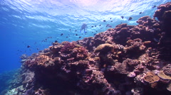 Ocean scenery snorkeller swimming on surface, people or person in shot, on Stock Footage