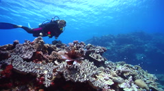 Expert diver with perfect buoyancy swimming on shallow coral reef with Common - stock footage