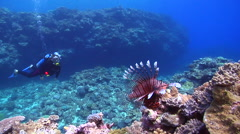 Female model scuba diver swimming on shallow coral reef with Common lionfish in Stock Footage