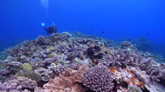Female model scuba diver swimming on shallow coral reef in Kingdom of Tonga, HD, Stock Footage