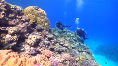 Buddy team of scuba divers swimming on shallow coral reef in Kingdom of Tonga, Stock Footage