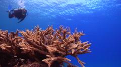 Female model scuba diver swimming on shallow coral reef with mixed hard coral Stock Footage