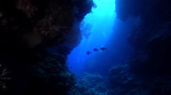 Ocean scenery great visibility, in cavern, HD, UP25697 Stock Footage