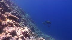 Ocean scenery slope, great visibility, on shallow wall, HD, UP25637 Stock Footage