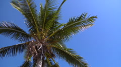 Coconut tree, HD, UP15919 - stock footage
