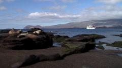 Galapagos sea lion sleeping on rocky shore, Zalophus californicum wollebacki, Stock Footage
