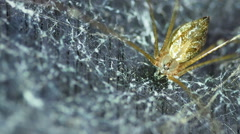 Close up spider. Stock Footage