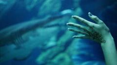 Hand girl touching aquarium where shark swims - stock footage