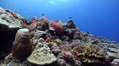 Ocean scenery look up hard corals, on shallow coral reef, HD, UP26837 Stock Footage
