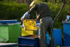 Beekeeper working on bee hive - stock photo