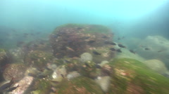 Ocean scenery wild conditions, tiny bubbles suspended, white water, fish feeding Stock Footage