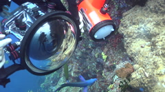 Moon wrasse attacking camera, Thalassoma lunare, HD, UP16294 Stock Footage