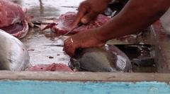 Yellowfin tuna, Thunnus albacares, HD, UP26419 Stock Footage