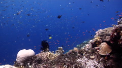 Ocean scenery planktivores, on shallow coral reef, HD, UP26818 Stock Footage